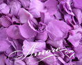 Violet Wisteria Freeze Dried Rose Petals Wedding large case 64 cups