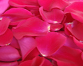 Hot Pink Watermelon Fresh Rose Petals Wedding 1000