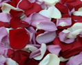 Red White Lavender Fresh Rose Petals Wedding 250