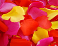 Yellow Red Hot Pink Fresh Rose Petals Wedding 6000