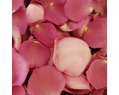 Deep Lavender Fresh Rose Petals Wedding 2000
