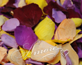 Tropical Mix Freeze Dried Rose Petals Wedding Medium Case 24 cups