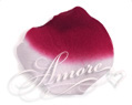 1000 Silk Rose Petals France (Burgundy and White)