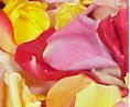 Samples Freeze Dried Rose Petals