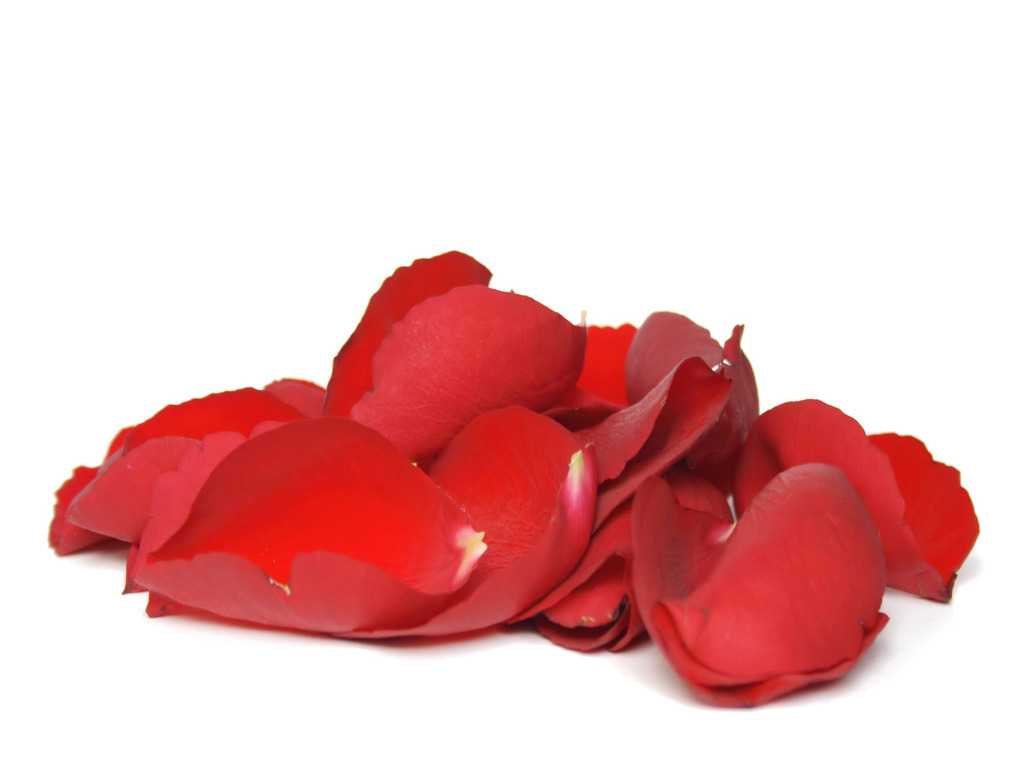 Red Fresh Rose Petals Wedding 1000