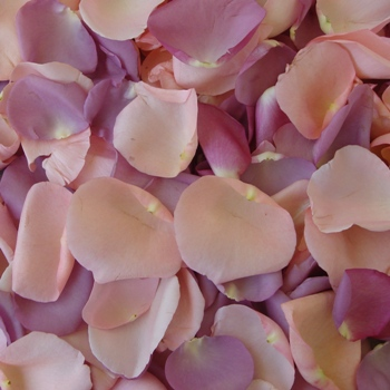 Lavender and Pink Fresh Rose Petals Wedding 3000