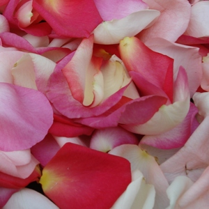 Pinky Blend Fresh Rose Petals Wedding 3000