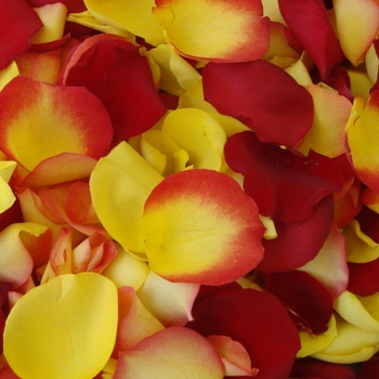Yellow and Red Fresh Rose Petals Wedding 3000