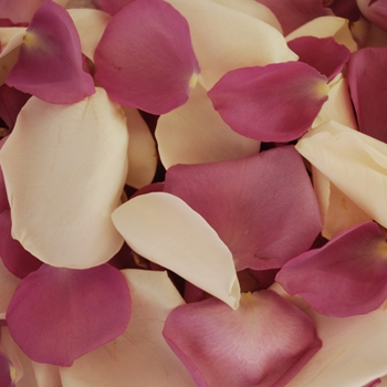 Lavender and White Fresh Rose Petals Wedding 500