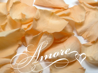Apricot Freeze Dried Rose Petals Wedding 5lb
