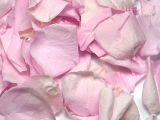 Double Pink Freeze Dried Rose Petals Wedding Small Case 8 cups