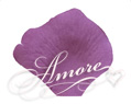 Violet Wisteria Silk Rose Petals Wedding 600