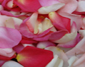 Pink Blend Fresh Rose Petals Wedding 1000
