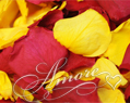 Autumn Harvest Freeze Dried Rose Petals Wedding 5lb