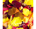 Fall Mix Freeze Dried Rose Petals Wedding Medium Case 24 cups