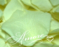 Light Green Pistachio Freeze Dried Rose Petals Wedding Medium Case 24 cups