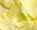Light Yellow Freeze Dried Rose Petals Wedding Small Case 8 cups