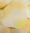 Peach Yellow Apricot Silk Rose Petals Wedding 1000