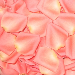 Salmon Fresh Rose Petals Wedding 500