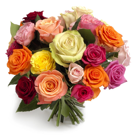 Fresh Roses Mix Colors 16 Inch length each stem