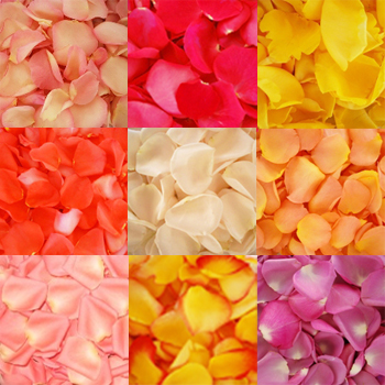 Assorted Colors Fresh Rose Petals for Wedding 500