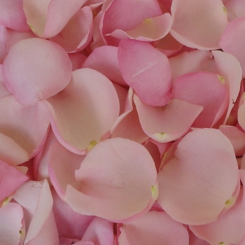 Light Pink Fresh Rose Petals Wedding 4000