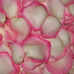 White Pink Fresh Rose Petals Wedding 500